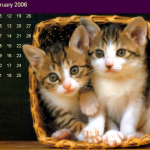 Kittens in Salesforce