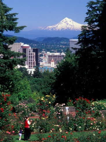 International Rose Test Garden Portland, OR.jpg