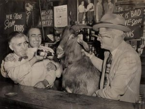 billy goat tavern.jpg